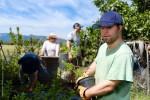 Tending blueberries