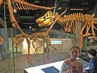 melb museum dinosaurs